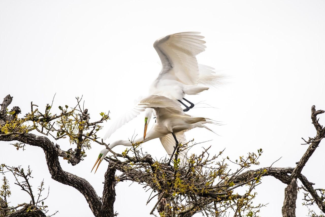Bird landing on tree