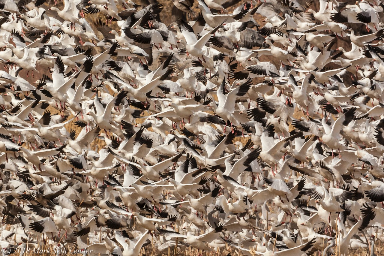 field full of birds