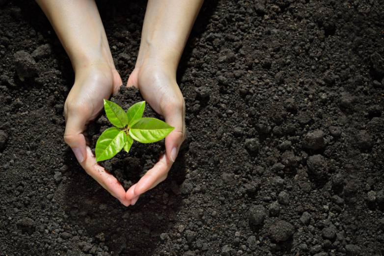 hands holding green plant in dirt